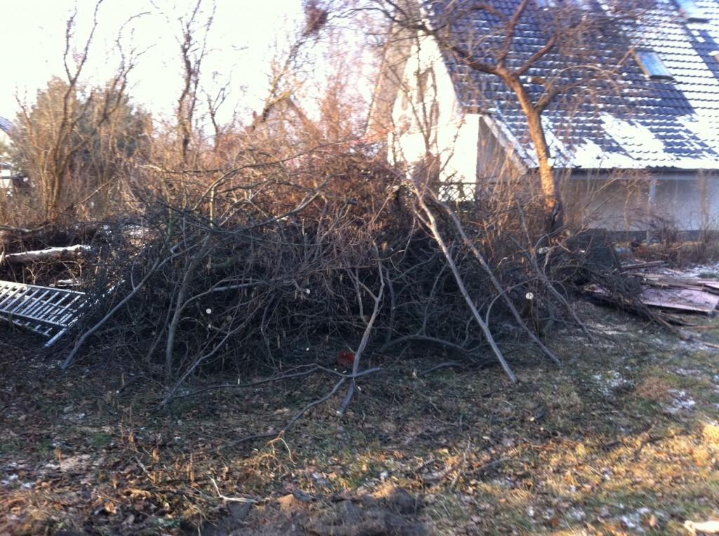 Nach der Baumfällung - massig Sträucher und Äste