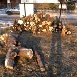 Baum gefällt - das bringt Brennholz für den Kamin