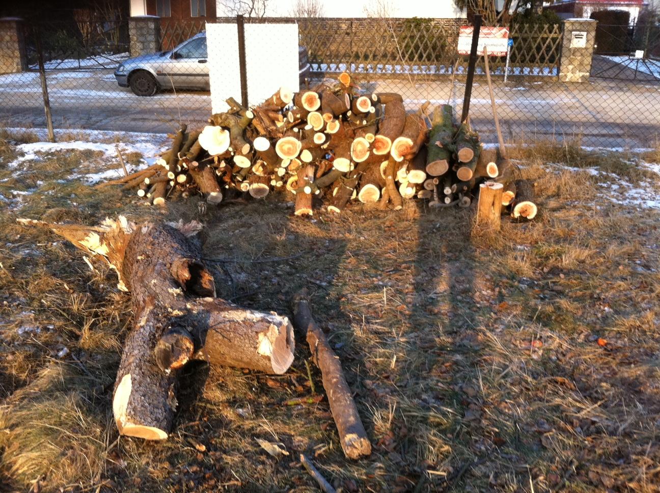 Gut gemocht Kosten Baumfällung – Preis fürs Baum fällen und entfernen HS45