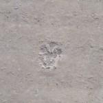 Abdruck im Beton: die Pfote der Katze
