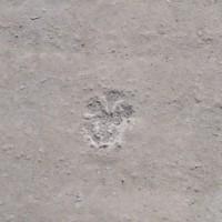 Wenn Katzen-Tatzen auf der Bodenplatte kratzen