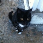 Sorgt für Sicherheit auf der Baustelle: Die Haus-Katze