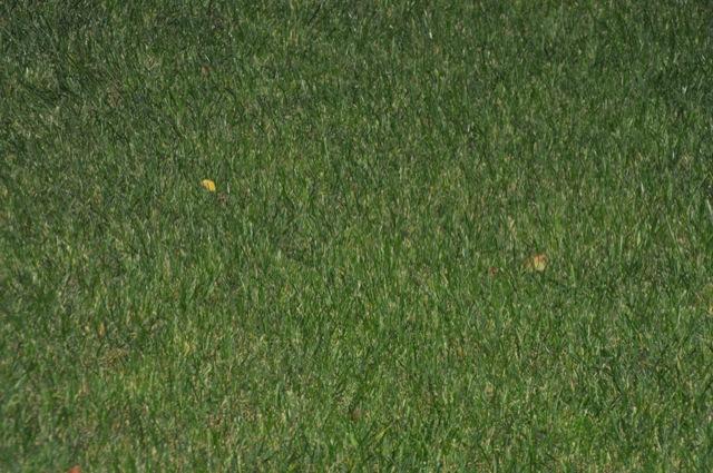 Detailansicht des Rasen