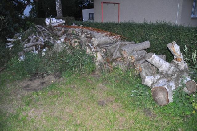 Holz von der Baumfällung