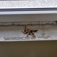 Dürfen Bauarbeiter & Handwerker im Haus rauchen?
