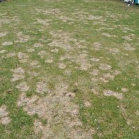 Rasen im Frühjahr pflegen & vorbereiten auf den Sommer