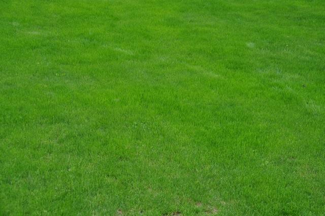 Gesamtbild - Rasenpflege nach mähen und düngen