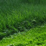 Rasenwachstum nach dem Düngen und Mähen