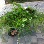 Viiiel Unkraut nach der Gartenarbeit