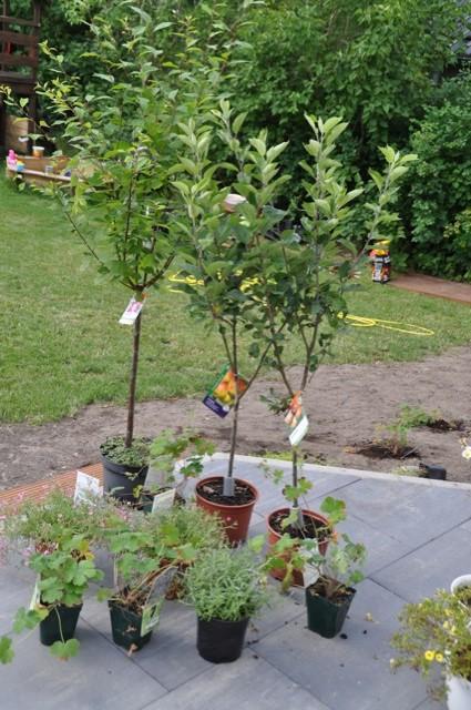 Pflanzen für den Hausbau im Baumarkt