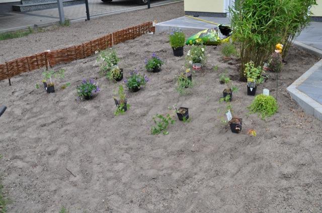 Pflanzen stehen Probe  für die Neuanlage