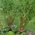 Günstige Pflanzen für die Garten-Neuanlage