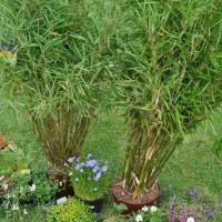 Garten Neuanlage – günstige Bepflanzung nach dem Hausbau