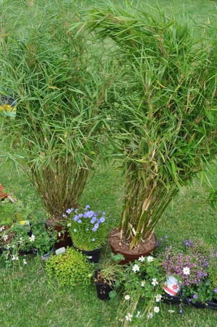 garten neuanlage g nstige bepflanzung nach dem hausbau hausbau blog On günstige gartenpflanzen