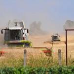 Mähdrescher bei der Ernte auf dem Feld