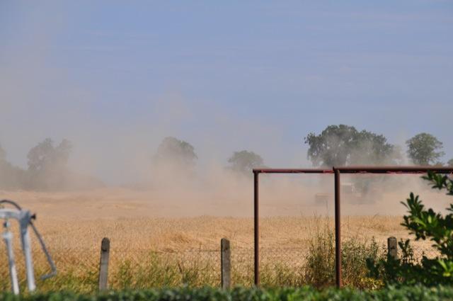 Korn & Getreide-Staub durchs Mähen auf dem Feld