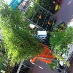 Pflanzen aus dem Baumarkt