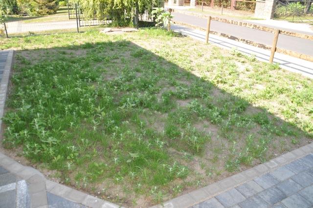 Rasen neuanlage unkraut pur im neuen rasen hausbau blog for Neuen garten anlegen