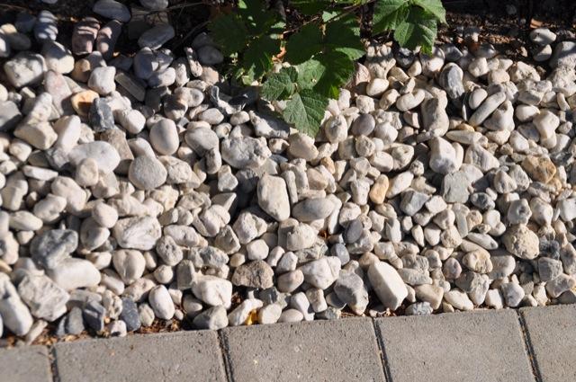 Zierkies - Kieselsteine zur Gehwegbegrenzung