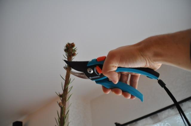 Einsatz der Gardena Gartenschere an der Tanne