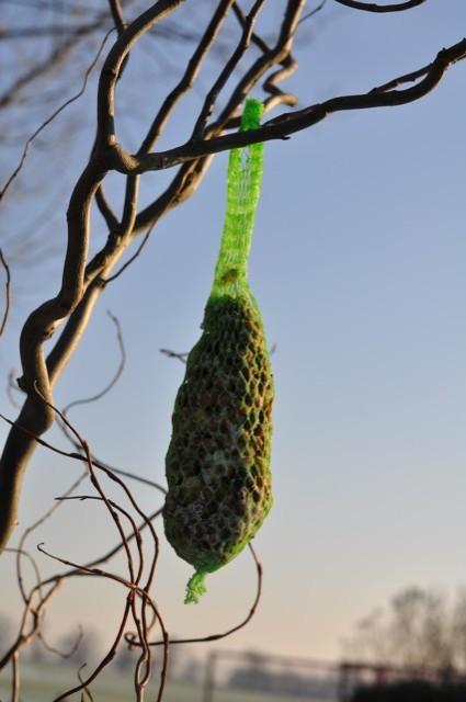 Lockmittel - Vogelfutter hängt am Baum
