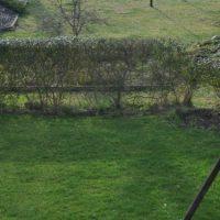 Rasenpflege Frühjahr: Wann Rasen mähen, düngen, vertikutieren?
