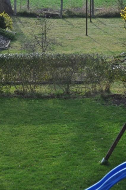 Rasenpflege Im Frühjahr 2019 Wann Düngen Mähen Vertikutieren