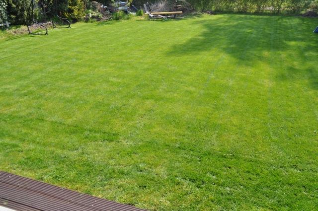 Der Rasen nach der Düngung und nach dem Mähen