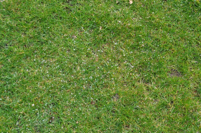 Dank Gartenkalk: sichtbare Spur vom Rasendünger