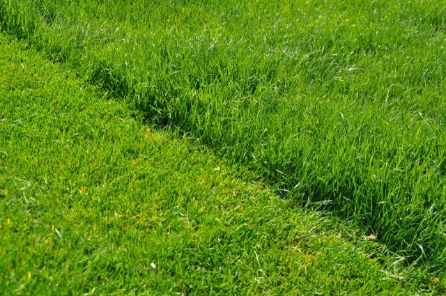 3 Wochen - Rasen-Wachstum nach der Düngung