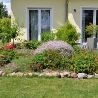 Entdeckung bei der Gartenarbeit: Längste Klee-Pflanze der Welt?