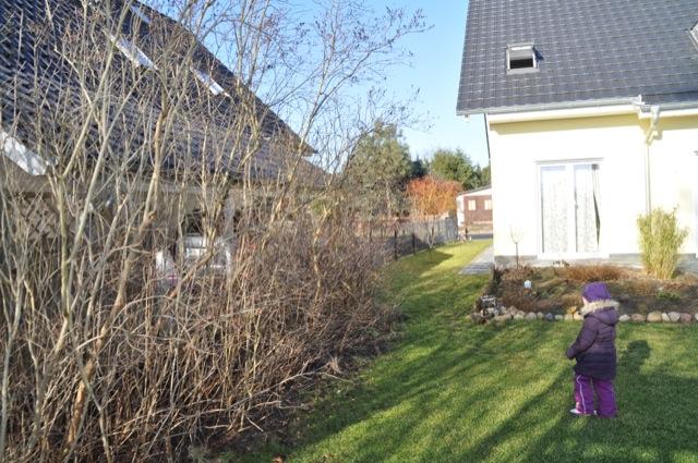 Ausgangslage: viel Äste, Bäume, Sträucher und Gestrüp