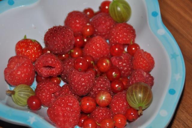 Obst aus dem Garten: Himbeeren, Stachelbeeren, Johannisbeeren