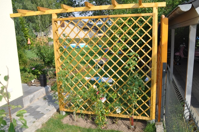 Rankgitter mit Rosen als Sichtschutzwand für den Garten