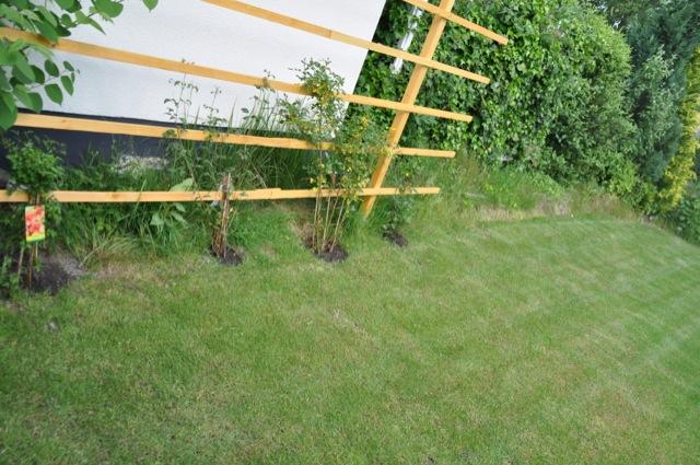 sichtschutz rankgitter aus holz f r den garten selber bauen hausbau blog. Black Bedroom Furniture Sets. Home Design Ideas