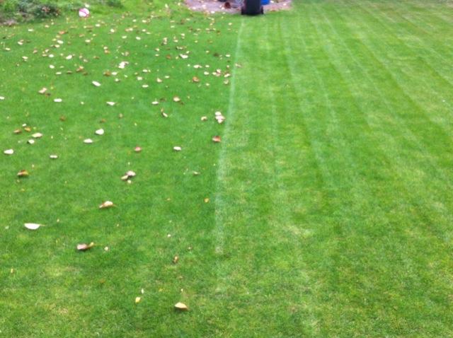 Blätter auf dem Rasen entfernen - ohne Harken