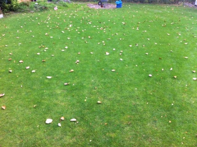 Im Herbst: Blätter auf dem Rasen