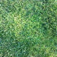 Moos im Rasen vernichten – Erfahrungen mit Moosentferner