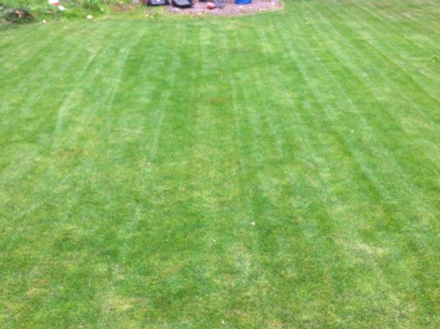 Laub entfernt - Rasen ohne Blätter