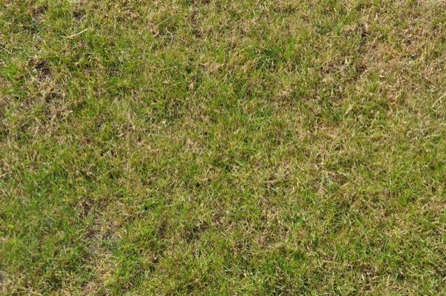 Rasen ist grossflächig unkrautfrei
