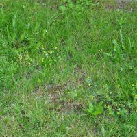 Erfahrungen mit Unkrautvernichtungsmittel – Hilfe bei Unkraut im Rasen?