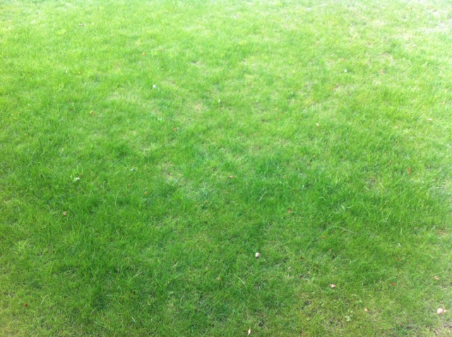 Langzeiteffekt im Rasen dank Unkrautvernichter