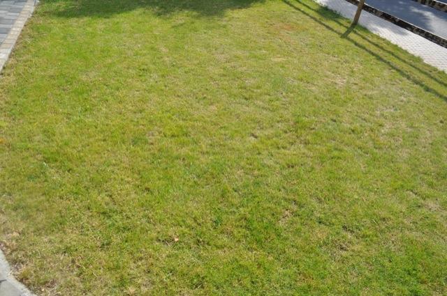 Wirkung des Unkrautvernichters im Rasen