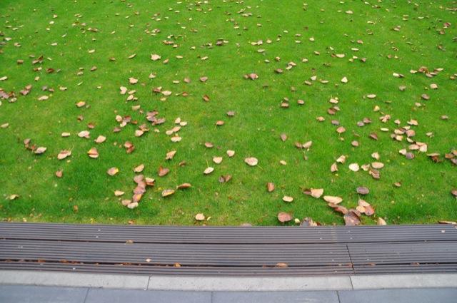 Laub und Blätter bei uns im Garten auf dem Rasen
