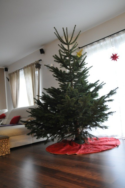 2,50 Meter - ein grosser Weihnachtsbaum
