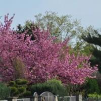 Frühlings-Impressionen aus dem Garten – Blüten & Wachstum beginnt