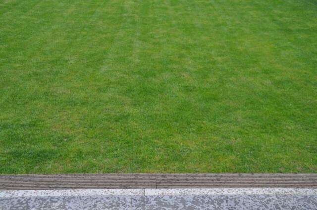 Das Rasen-Wachstum im Frühling zeigt schon ein ordentliches grün