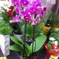 Exotische Pflanzen im heimischen Garten und Terrasse?
