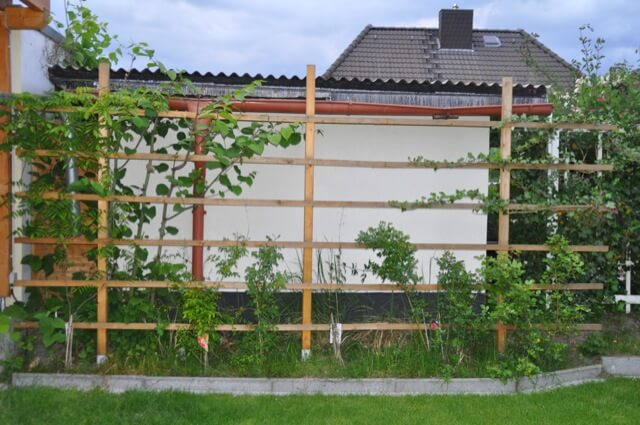 Rankgitter mit Pflanzen
