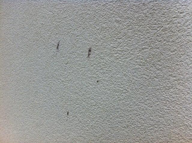 Reinigung der Fassade - Vogelkot an der Hauswand-vogelkot